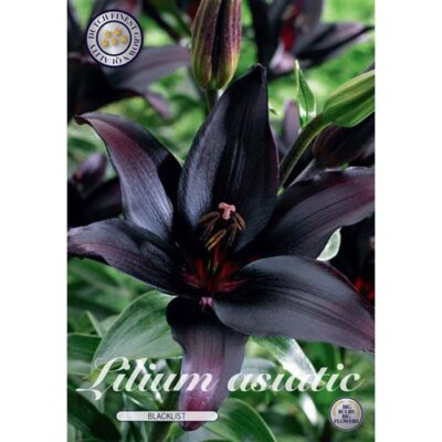 40264 Lilium – Λίλιουμ Blacklist