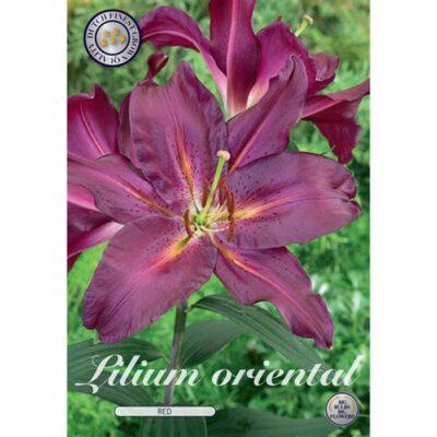 40276 Lilium – Λίλιουμ Oriental Red