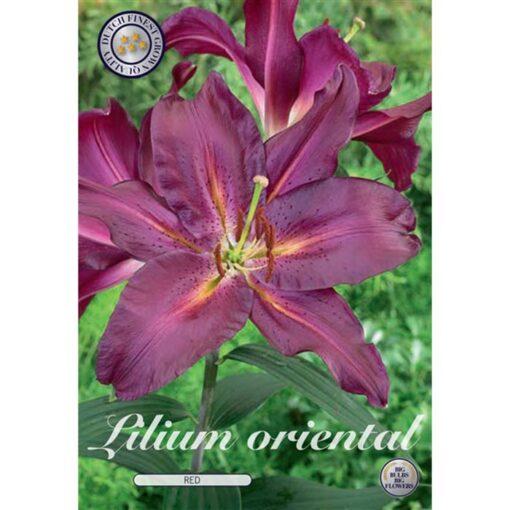 40276 Lilium Oriental Red