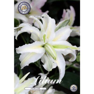 40282 Lilium – Λίλιουμ Polar Star