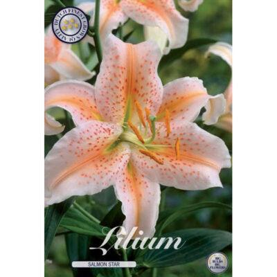 40286 Lilium – Λίλιουμ Salmon Star