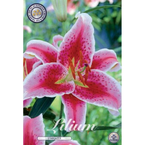 40289 Lilium Stargazer
