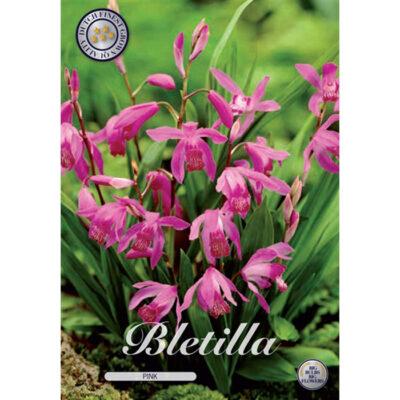 40302 Bletilla Pink