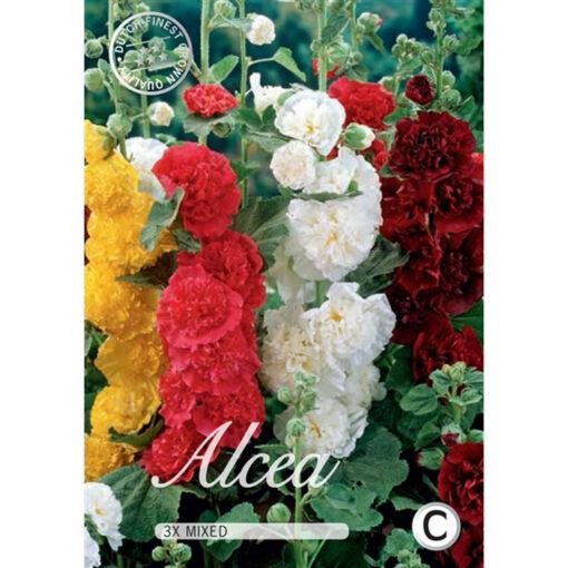40356 Alcea Mixed