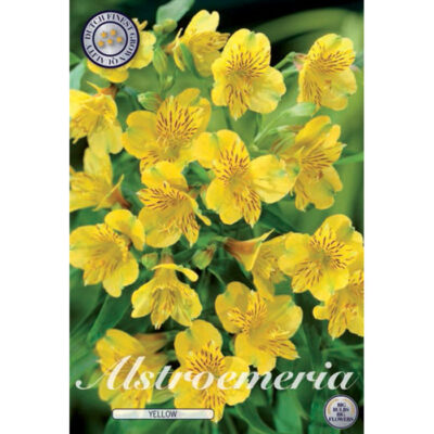 40361 Alstroemeria Yellow
