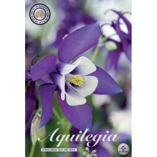 40366 Aquilegia Spring Magic Navy and White