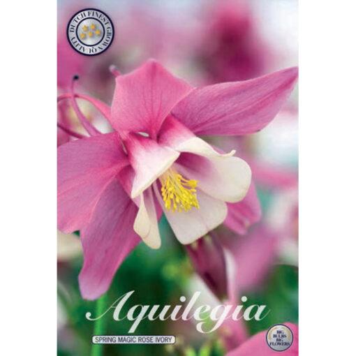 40367 Aquilegia Spring Magic Rose Ivory