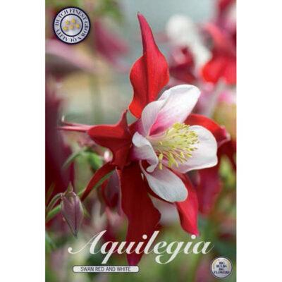 40368 Aquilegia Swan Red an White