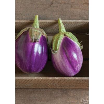 20260 Rosa Bianca – Μελιτζάνα – Solanum melongena