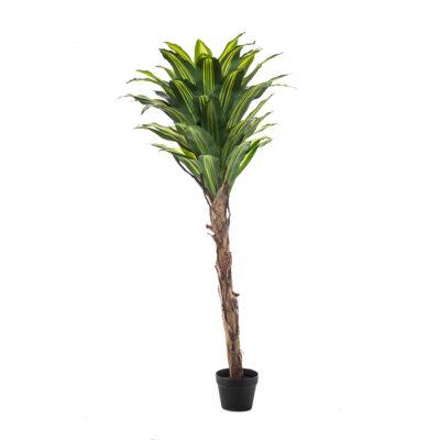 Artificial plant – Dracaena Massangeana Α22204