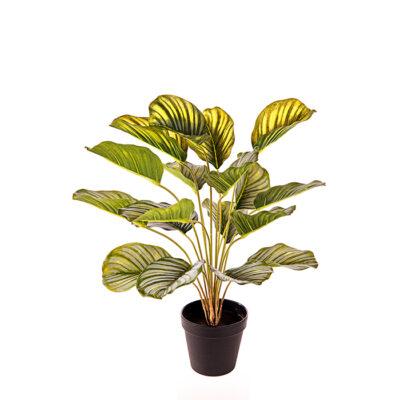 Artificial plant – Calathea Α24144