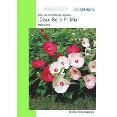 N4999 – Ιβίσκος μοσχευτός μείγμα – Hibiscus moscheutos «Disco Belle F1 Mix»