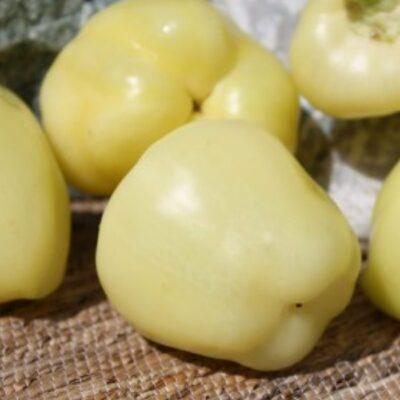 DF 4009 Creamy Blocky – Πιπεριά – Capsicum annuum
