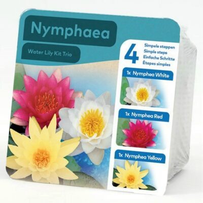 Y 0020977 Nymphaea Mix (Νούφαρο)