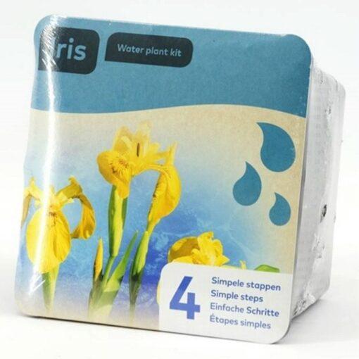 Y 1320930 Iris pseudacorus