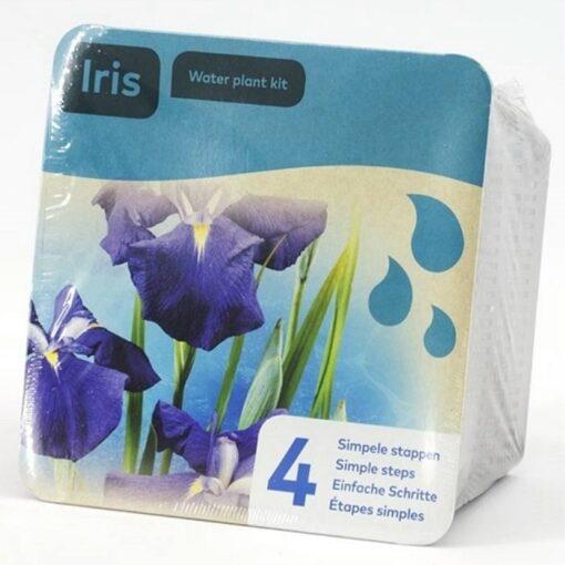Y 1520925 Iris leavigata