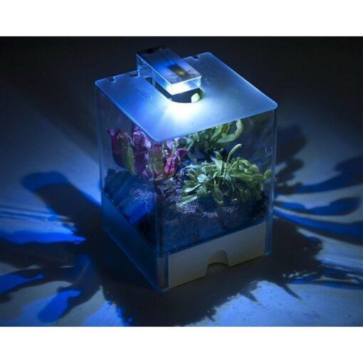 Bye Bye Fly terrarium για σαρκοφάγα φυτά