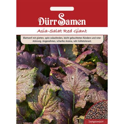 DS1897 – Κόκκινη ασιατική μουστάρδα – Brassica juncea «Red Giant»