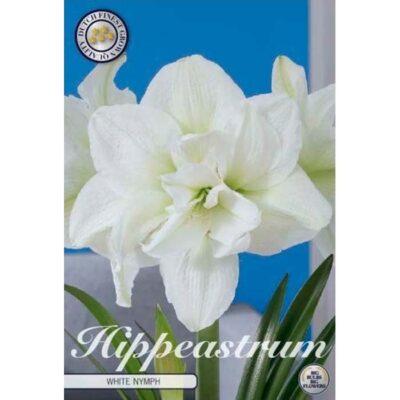 85070 Amaryllis – Αμαρυλλίς White Nymph